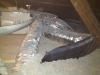 engineered duct work buried in additional cellulose attic insulation