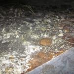 Humid crawlspace